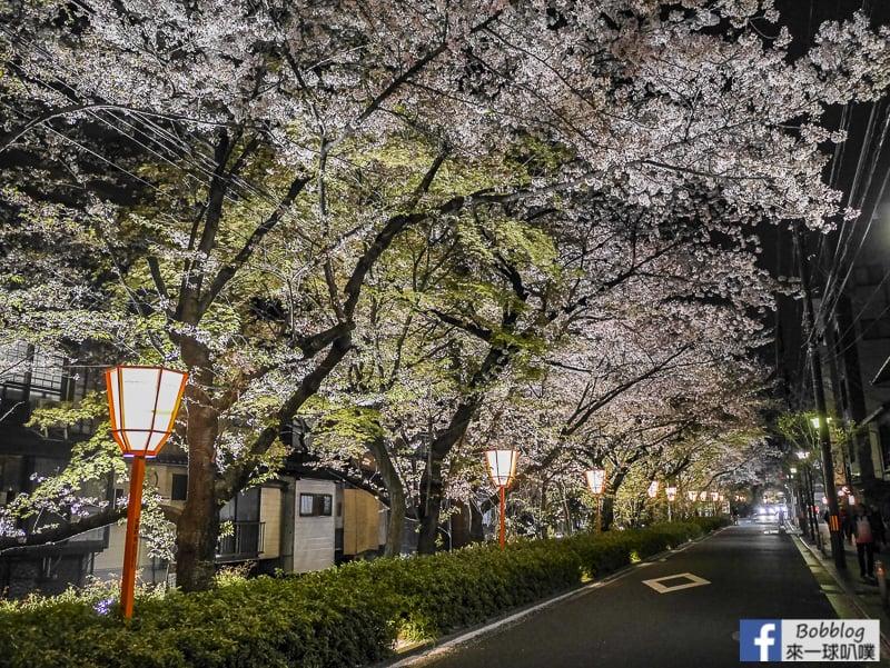 Takasegawa-night-sakura-27