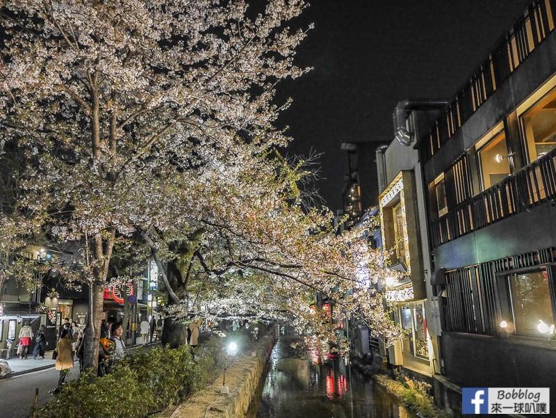 Takasegawa-night-sakura-6