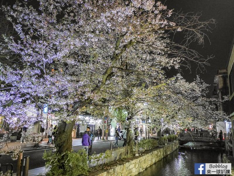 Takasegawa-night-sakura-8