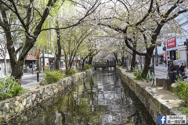 Takasegawa-sakura-4