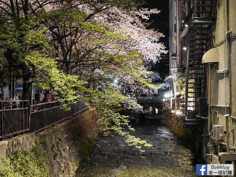 Tatsumi-Bridge-sakura-12