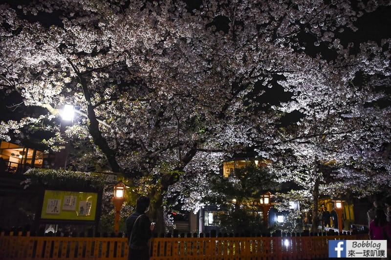 Tatsumi-Bridge-sakura-13
