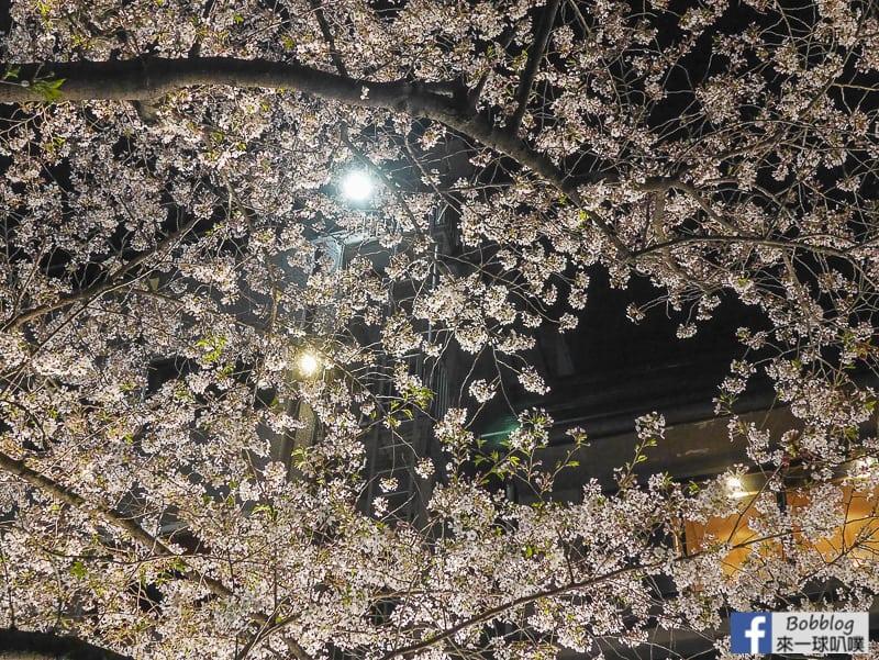 Tatsumi-Bridge-sakura-5