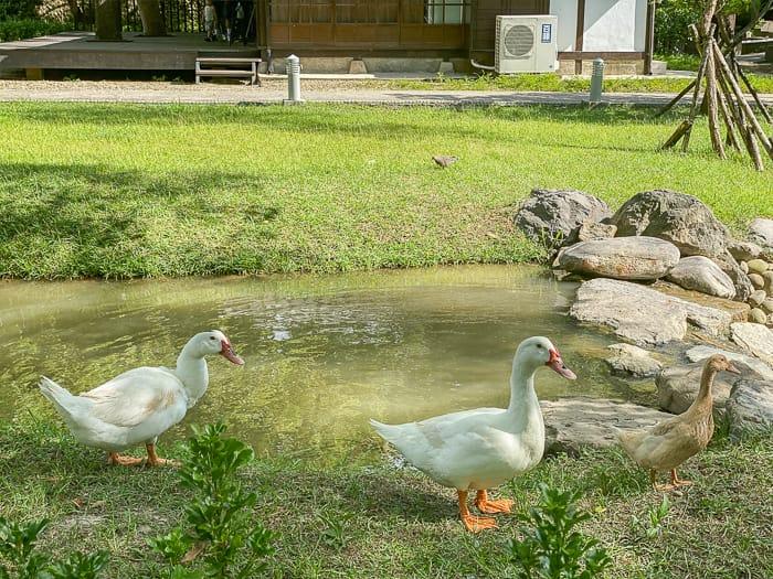 Hsinchu park 51