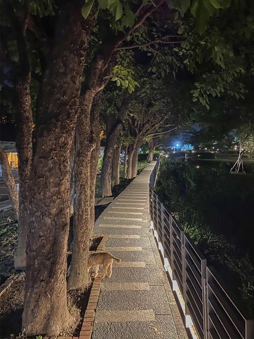 Hsinchu park 53