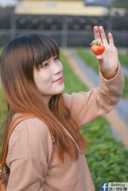 strawberry-15