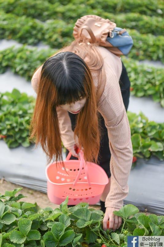 strawberry-17