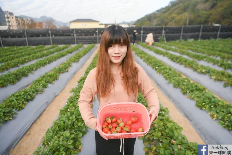 strawberry-24
