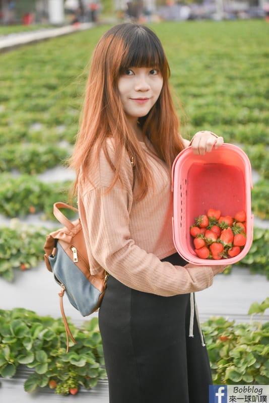 strawberry-27