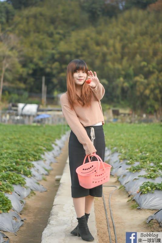 strawberry-31