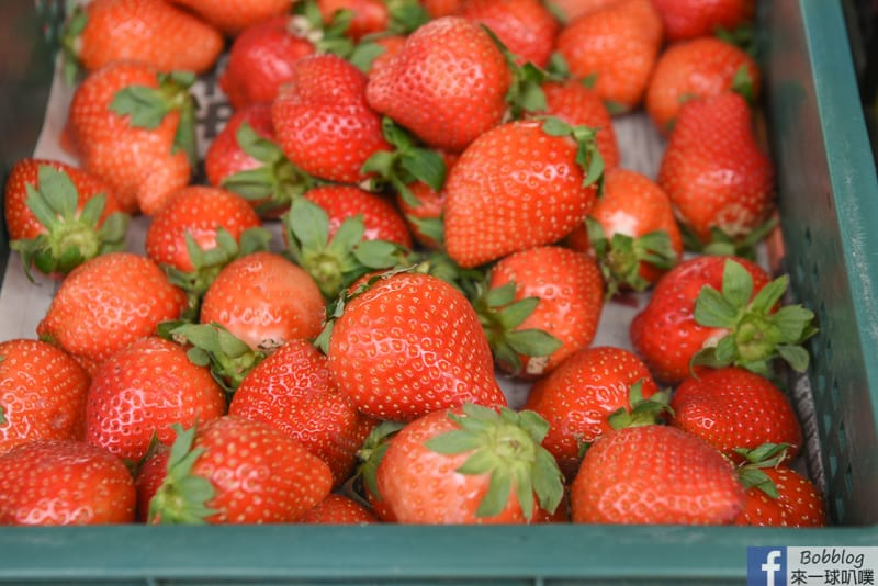 strawberry-35