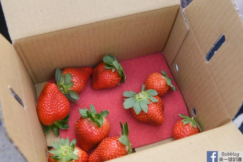 strawberry-49