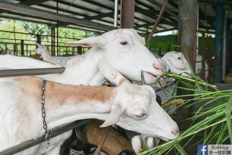 延伸閱讀:宜蘭親子景點|宜農牧場(30元門票,可餵羊兔子迷你豬天竺鼠)