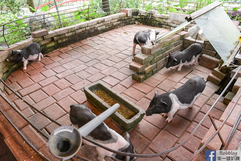 ilan-farm-43