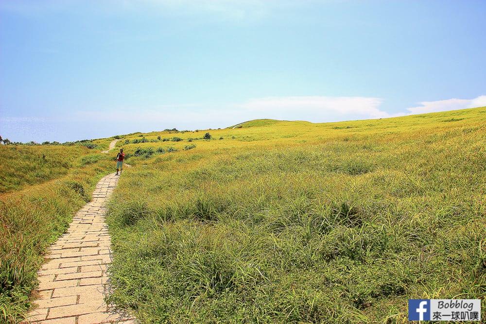 Lan-Yu-Cing-Cing-Grass-10