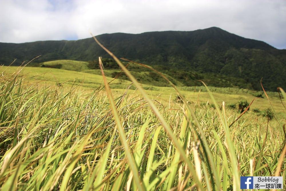 Lan-Yu-Cing-Cing-Grass-13