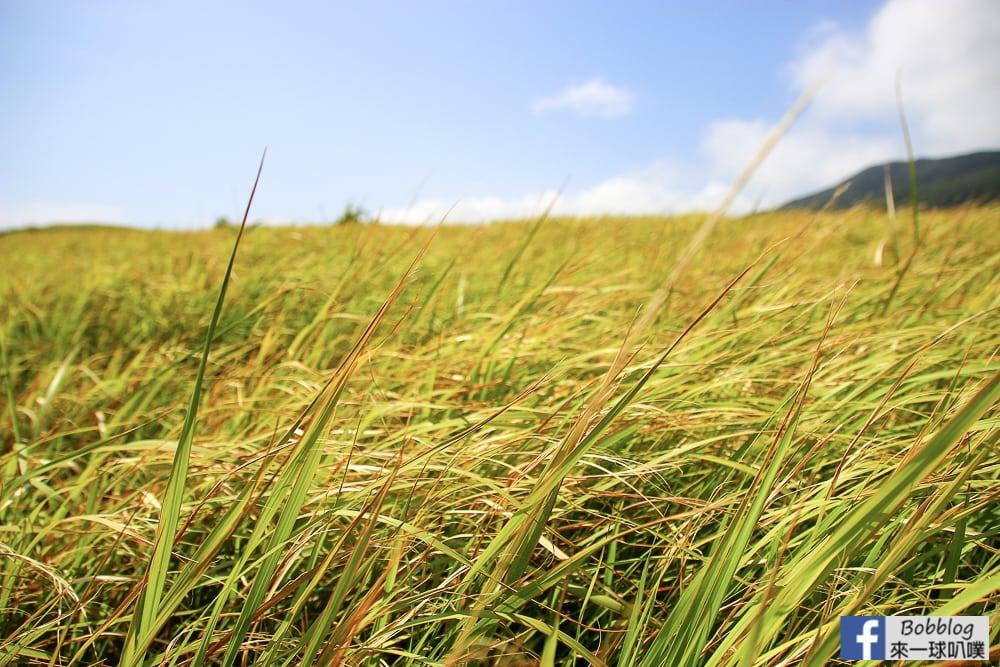 Lan-Yu-Cing-Cing-Grass-14