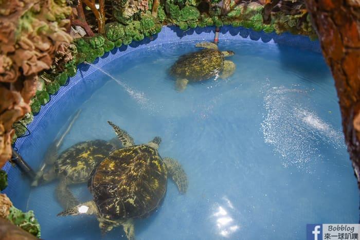 Dayi Temple Sea Turtles 13