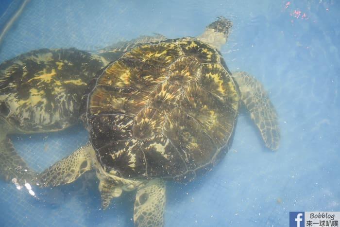 Dayi Temple Sea Turtles 14