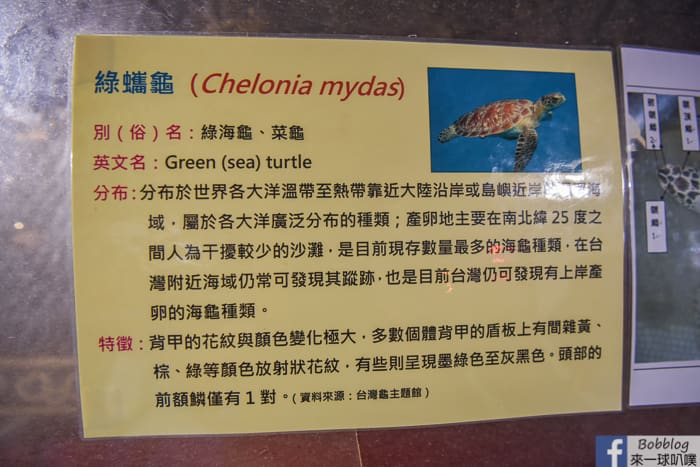 Dayi Temple Sea Turtles 15