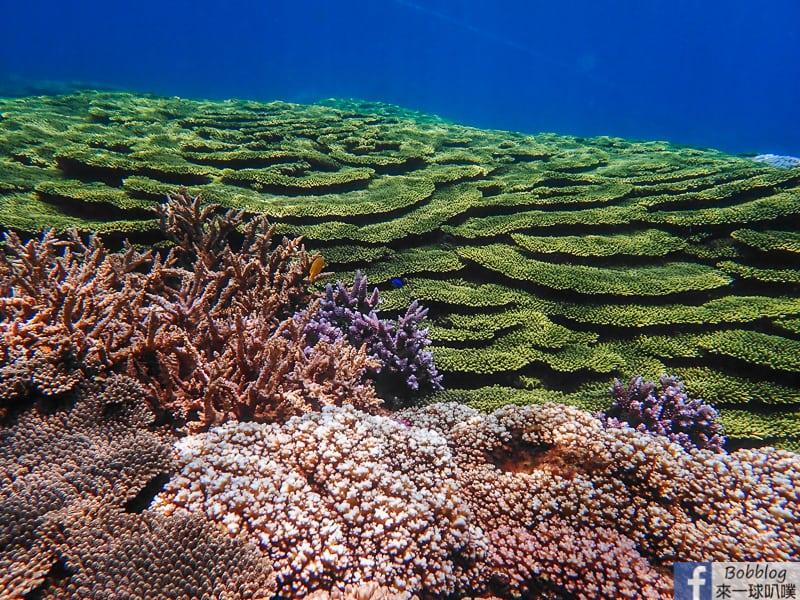網站近期文章:澎湖七美月鯉灣浮潛、超美珊瑚礁群與魚群共舞、白色貝殼珊瑚沙灘