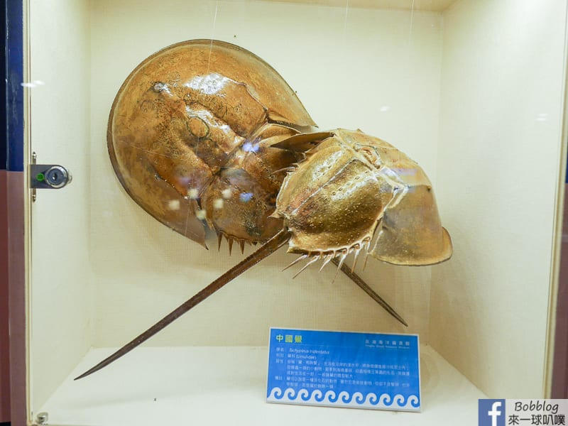 penghu-ocean-resources-museum-10