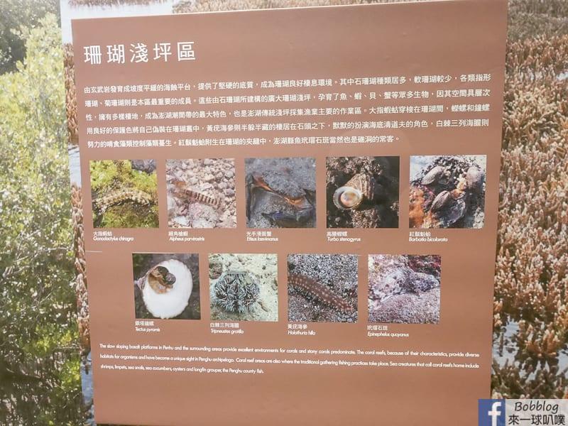 penghu-ocean-resources-museum-13