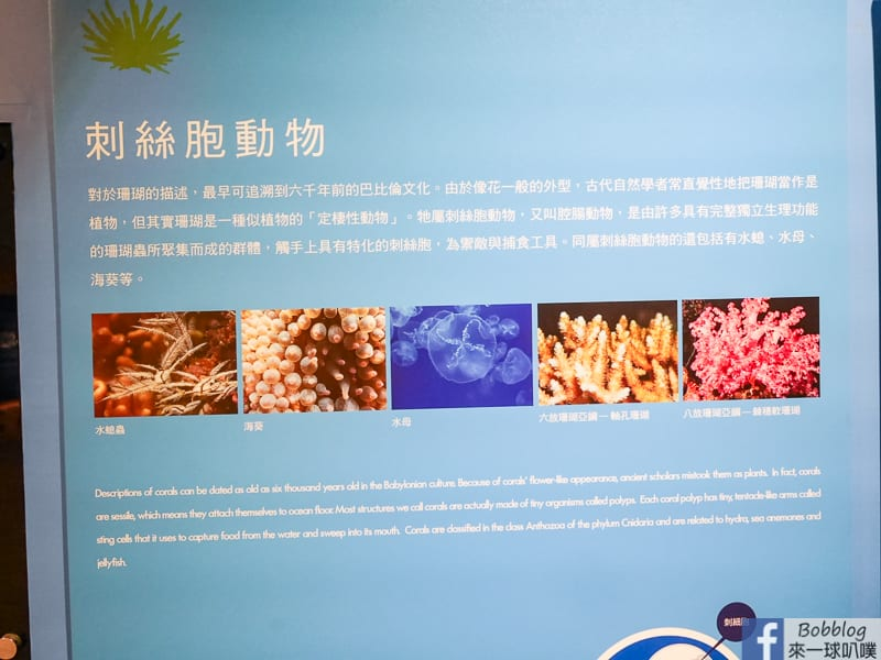 penghu-ocean-resources-museum-15