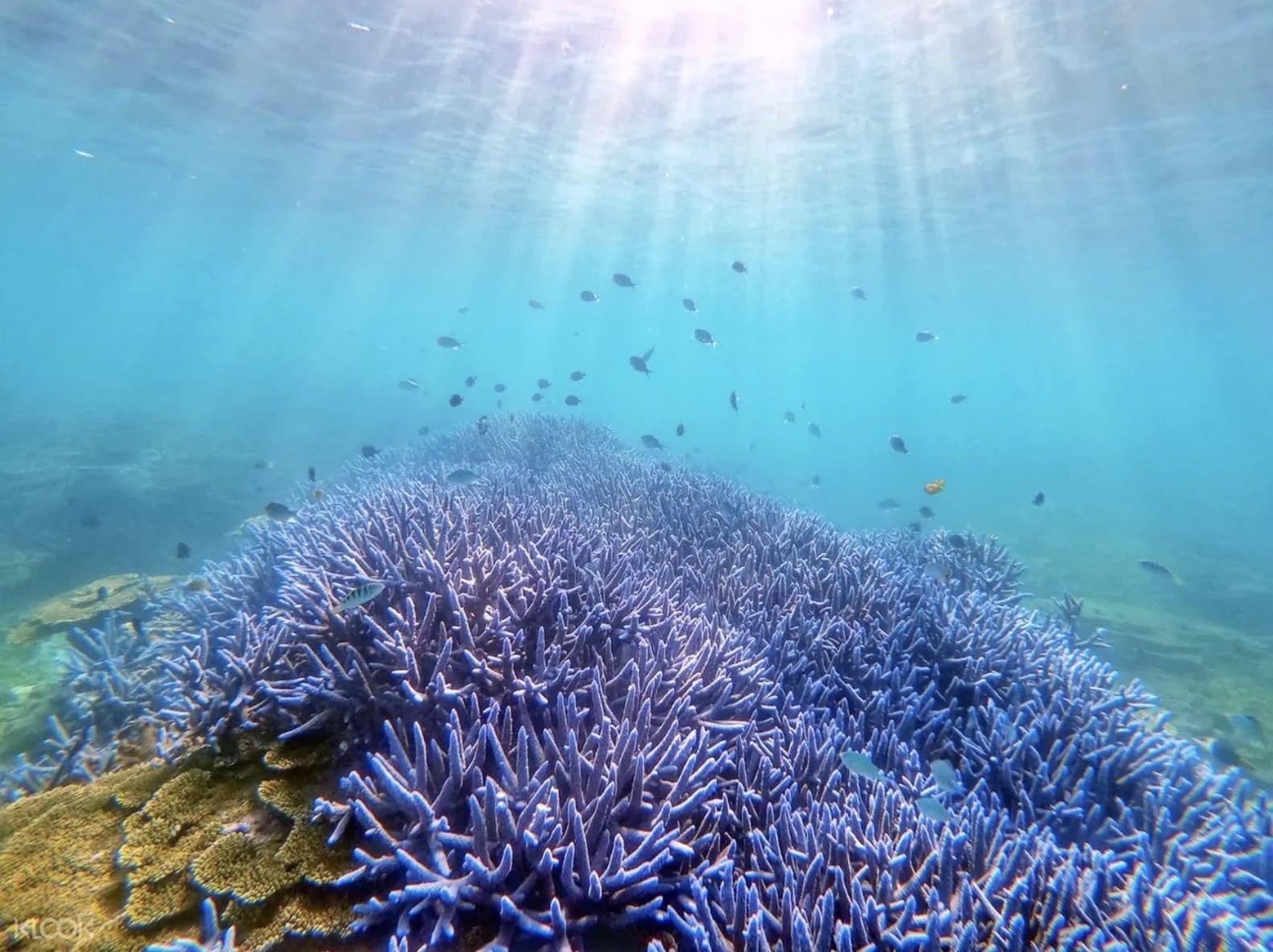 澎湖浮潛景點推薦整理(本島、忘憂島、七美、東海、吉貝)