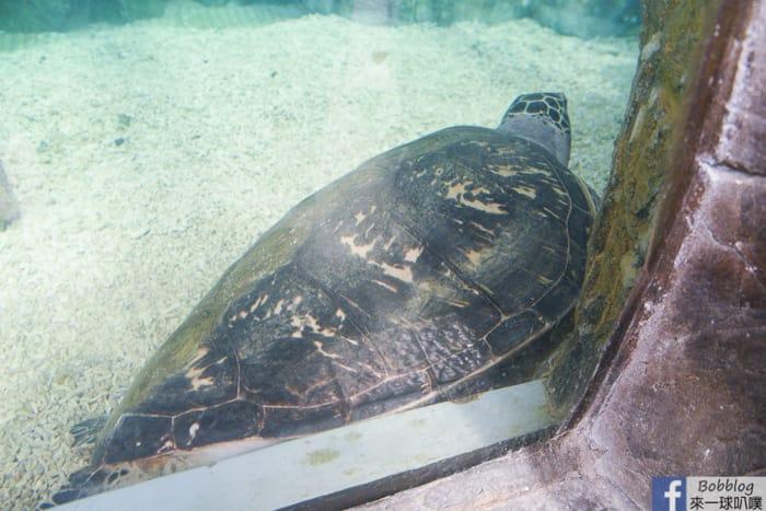 penghu-aquarium-10