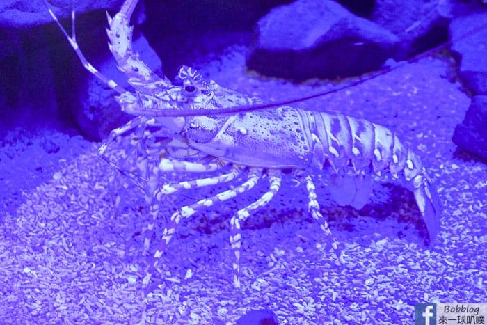 penghu-aquarium-11