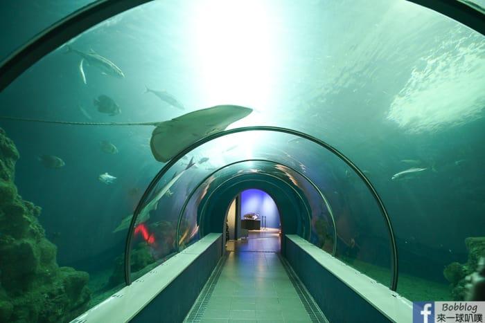 penghu-aquarium-14