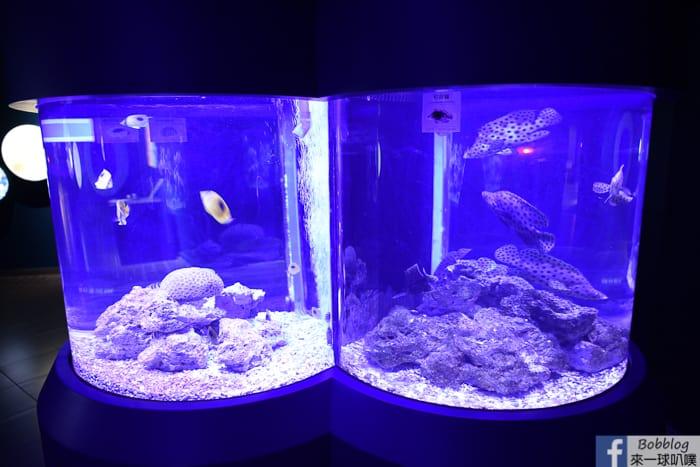 penghu-aquarium-18