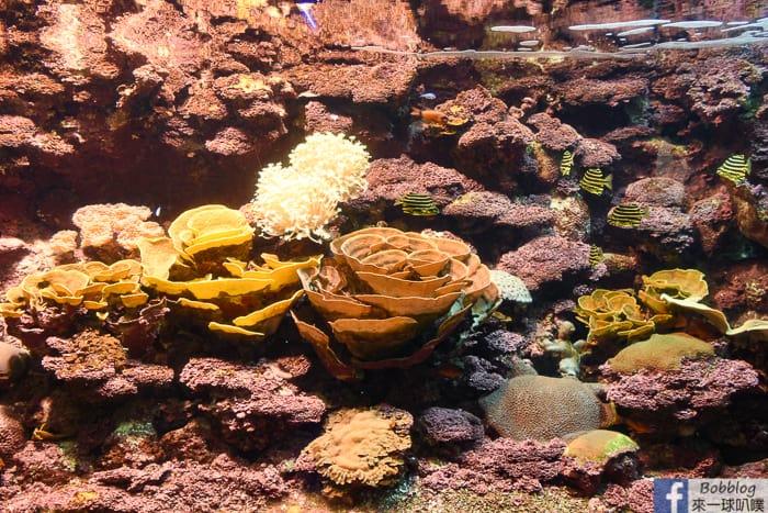 penghu-aquarium-19