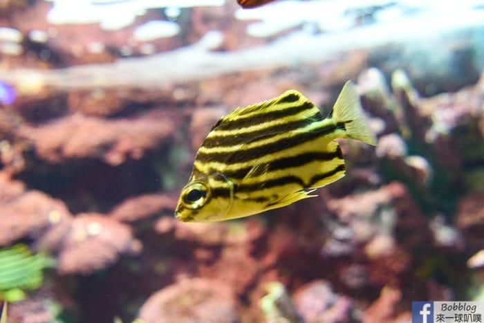 penghu-aquarium-20