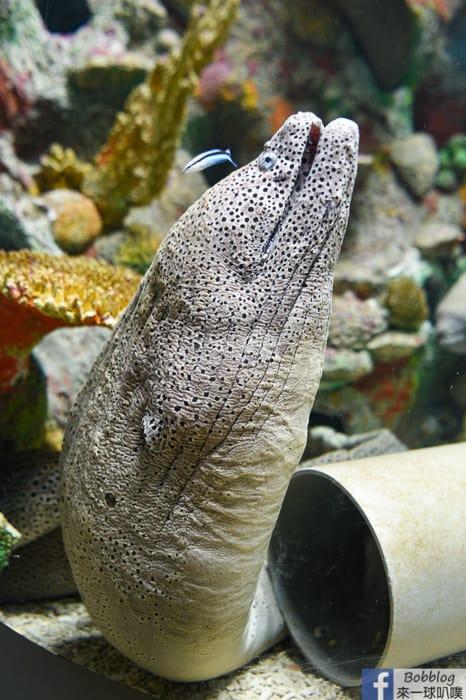 penghu-aquarium-21