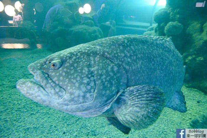 penghu-aquarium-27