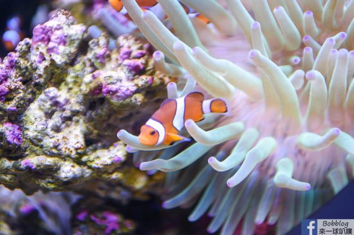 penghu-aquarium-35