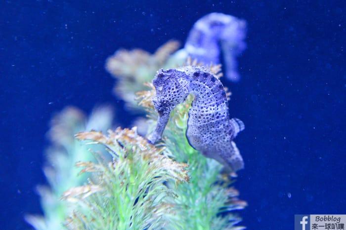 penghu-aquarium-36