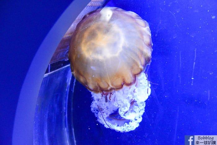 penghu-aquarium-38