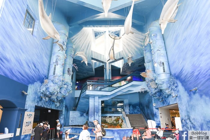 澎湖白沙鄉|澎湖水族館(親子景點,餵食秀,雨天備案景點)