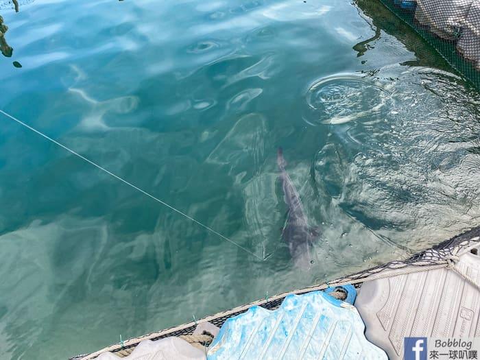 Penghu fish farming 43