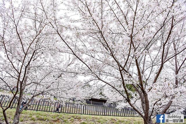 Arakurayama Sengen Park-57