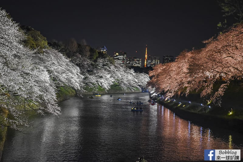 東京賞櫻最熱門-千鳥淵綠道櫻花,千鳥淵划船,櫻花拍攝地點