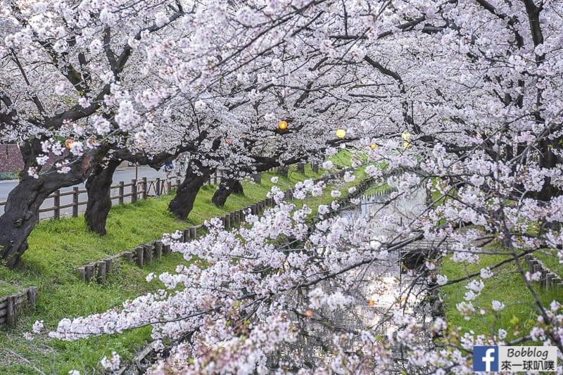 Hikawa Shrine 13
