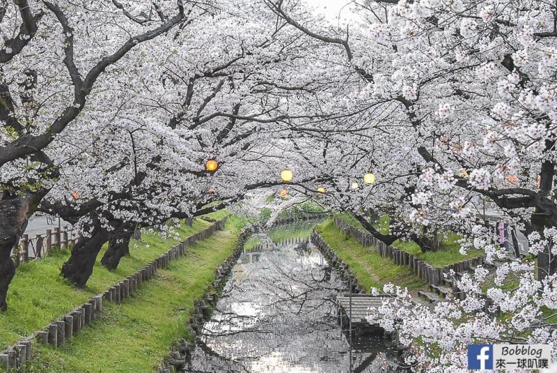 Hikawa Shrine 18