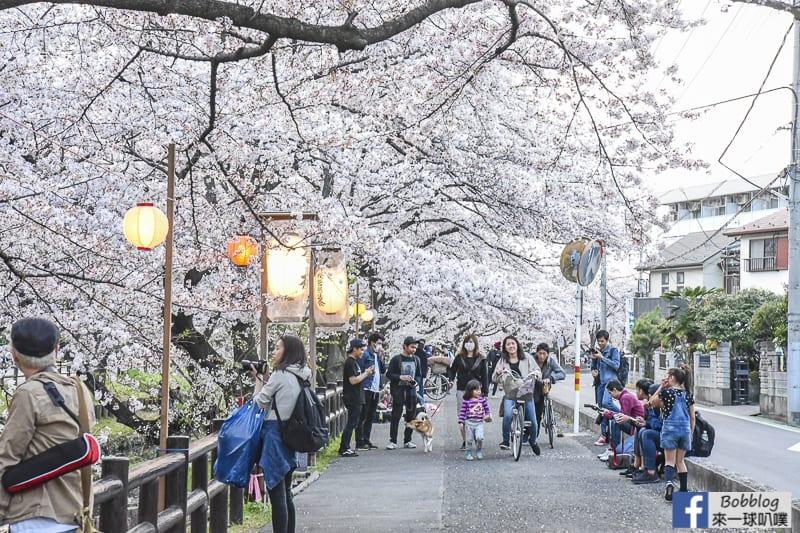 Hikawa Shrine 20