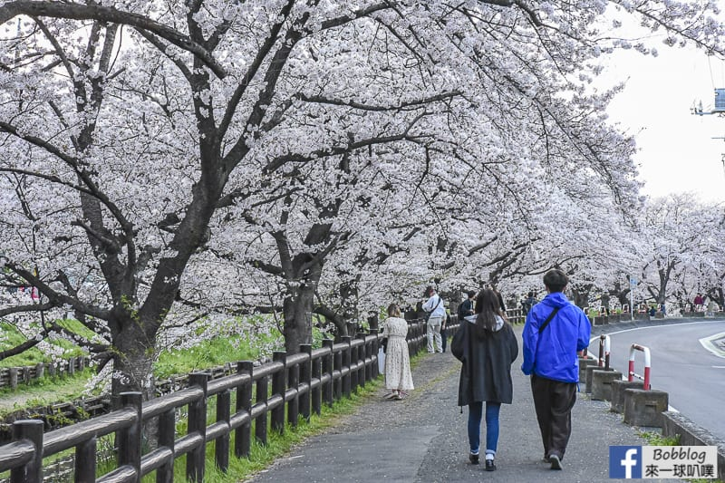 Hikawa Shrine 22