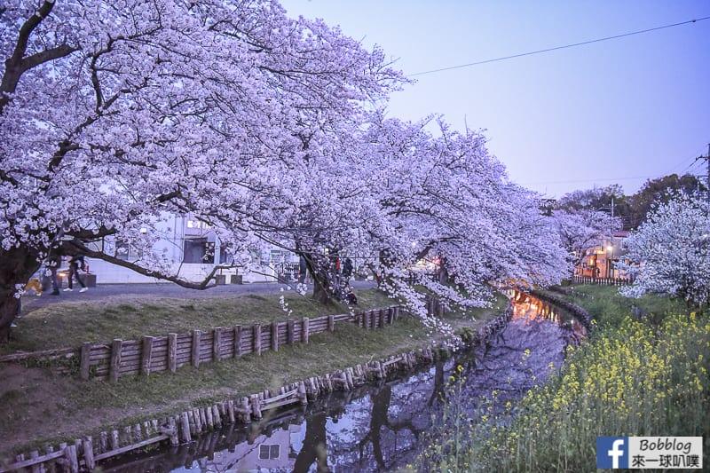 Hikawa Shrine 27