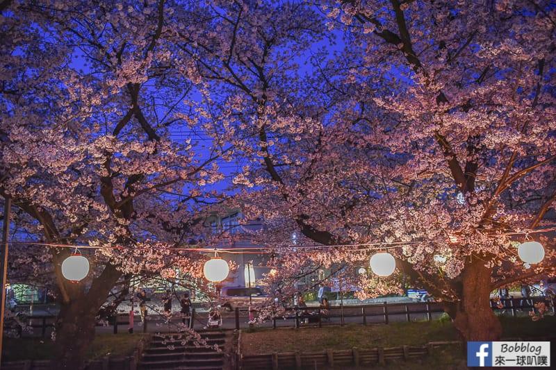 Hikawa Shrine 33